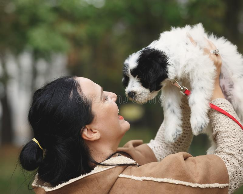 Woman and Tibetan terrier puppy playing together outdoor stock image
