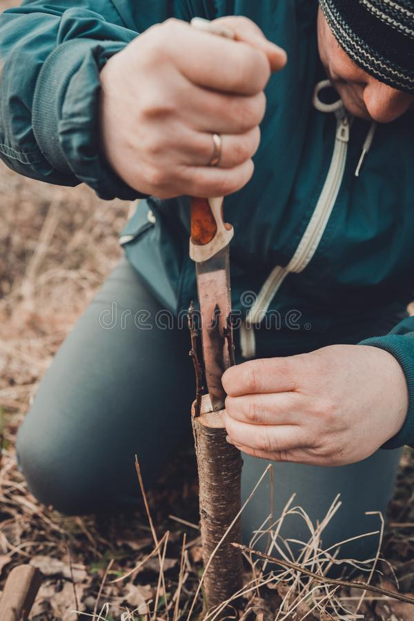 A woman cuts a young tree with a knife for the inoculation of the fruit branch stock photos