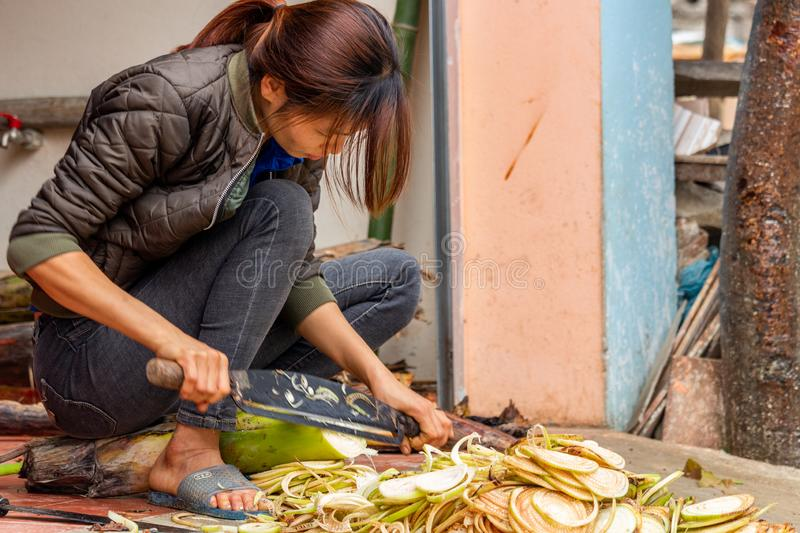 Woman cutting a plant Vietnam. Ha Giang, Vietnam - March 17, 2018: Woman from the Hmong ethnic minority cutting a plant in front of her house in the Yen Minh royalty free stock image