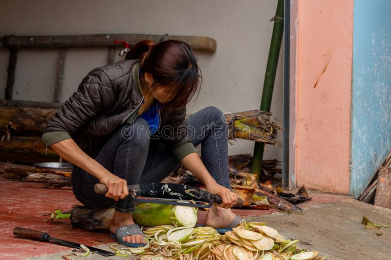 Woman cutting a plant Vietnam. Ha Giang, Vietnam - March 17, 2018: Woman from the Hmong ethnic minority cutting a plant in front of her house in the Yen Minh stock photography
