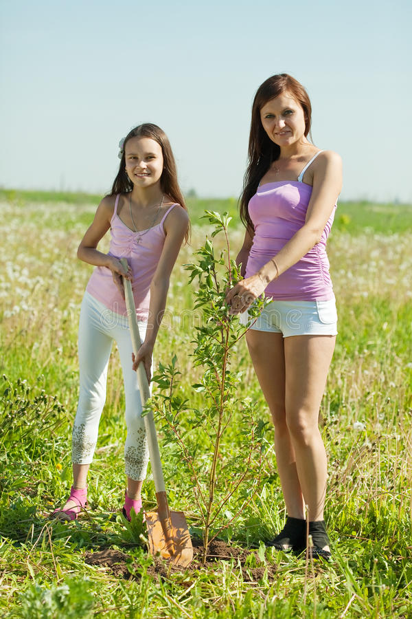 Woman and daughter planting tree stock images