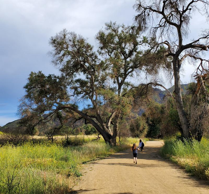 Woman and daughter walking together on a trail or dirt road in the woods next to a yellow field royalty free stock images