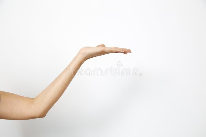 Woman& x27 de main ; s tenant quelque chose photos libres de droits