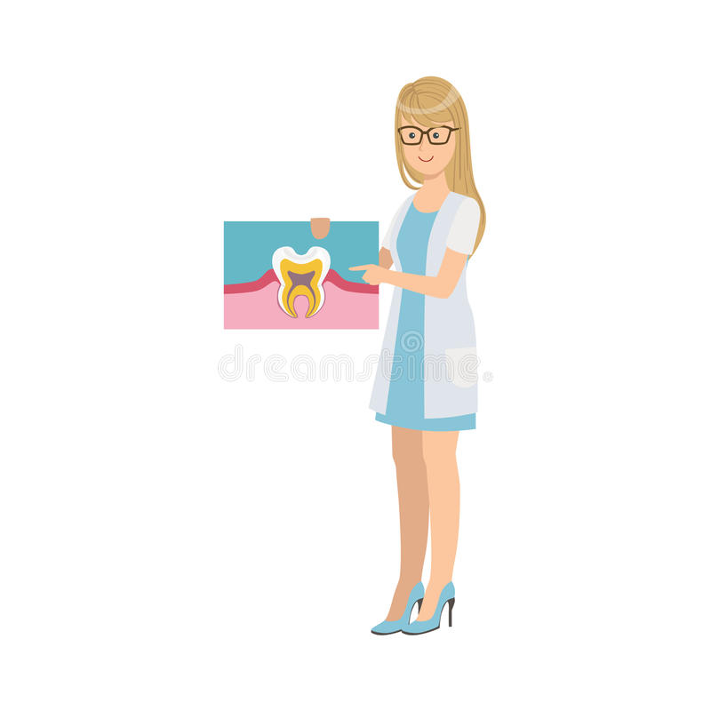 Woman Dentist In White Gown Holding Tooth Anatomy Drawing. Simple Design Illustration In Cute Fun Cartoon Style On White Background vector illustration