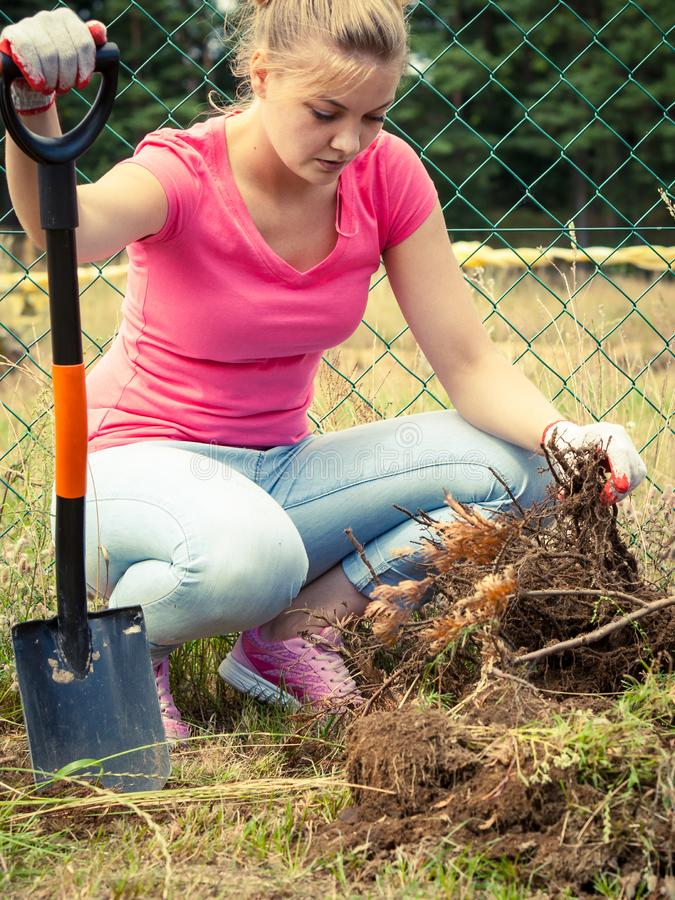 Woman digging hole in garden royalty free stock photography