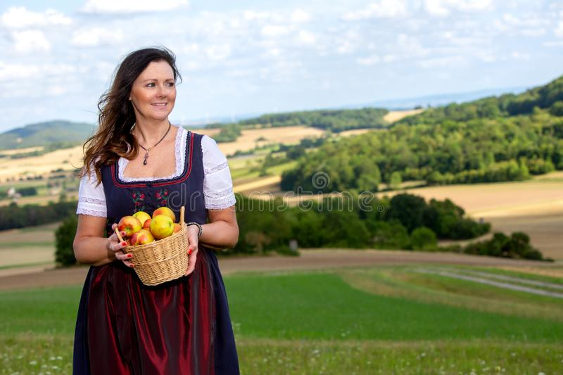 Woman in dirndl standing in meadow and holding a basket of apples stock images