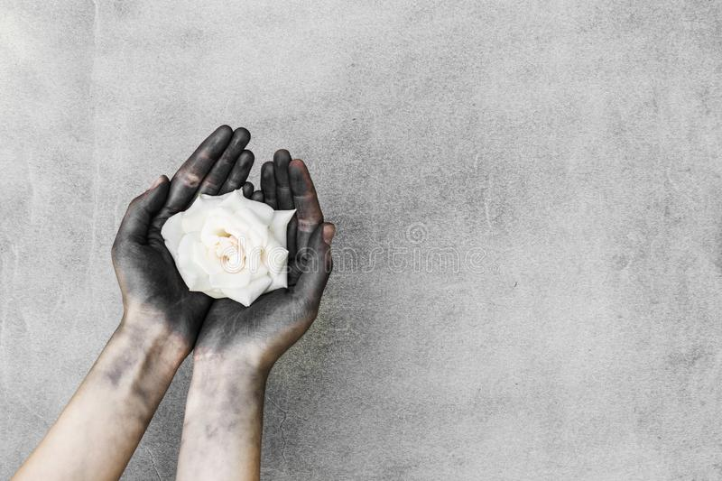 Woman dirty black hands holding white rose on gray background. Woman dirty black hands holding white rose on  gray background stock image