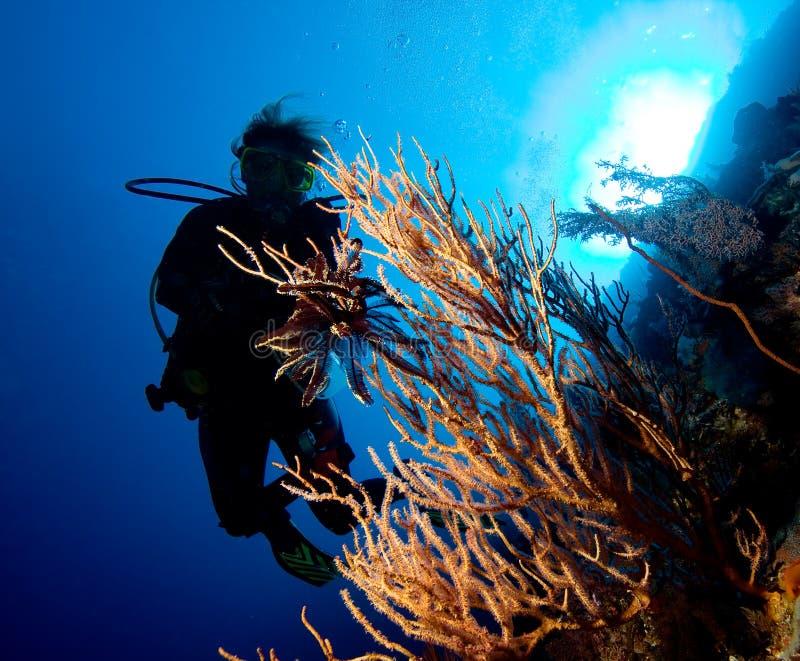 Download Woman diver stock image. Image of below, depth, submerged - 16639669