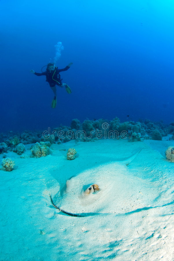 Download Woman diver with a ray stock photo. Image of water, blue - 3583522