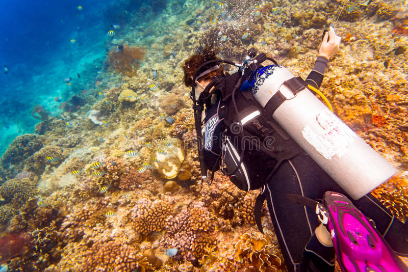 Woman diver at tropical coral reef scuba diving in tropical ocean stock images