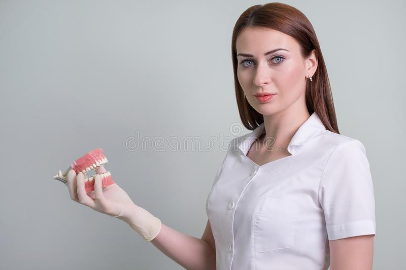 Woman doctor demonstrates oral hygiene on the layout, dentistry. space for text. stock image