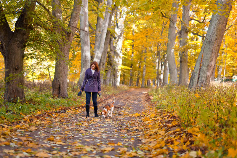Woman with dog in autumn park. Woman with dog walking in the park royalty free stock images