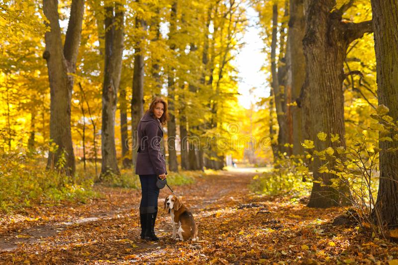 Woman with dog in autumn park. Woman with dog walking in the park stock photos