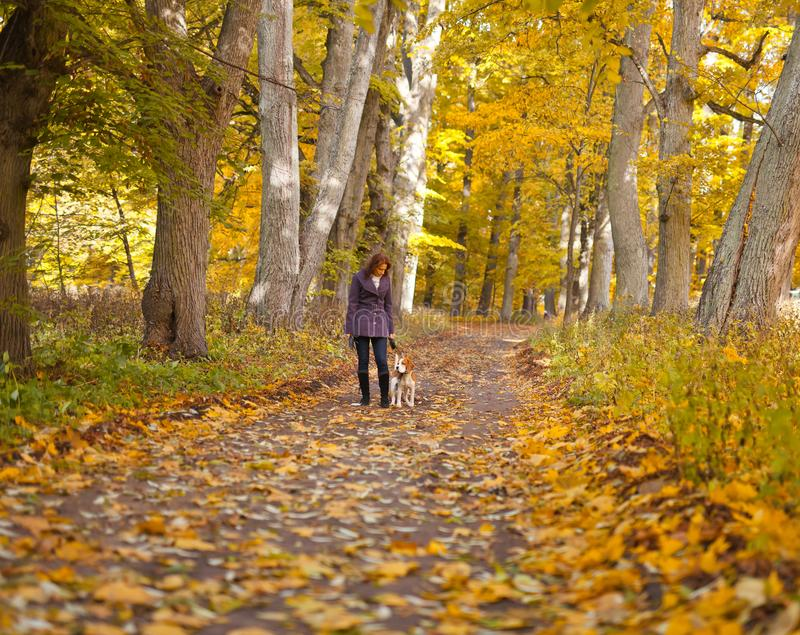 Woman with dog in autumn park. Woman with dog walking in the park royalty free stock image