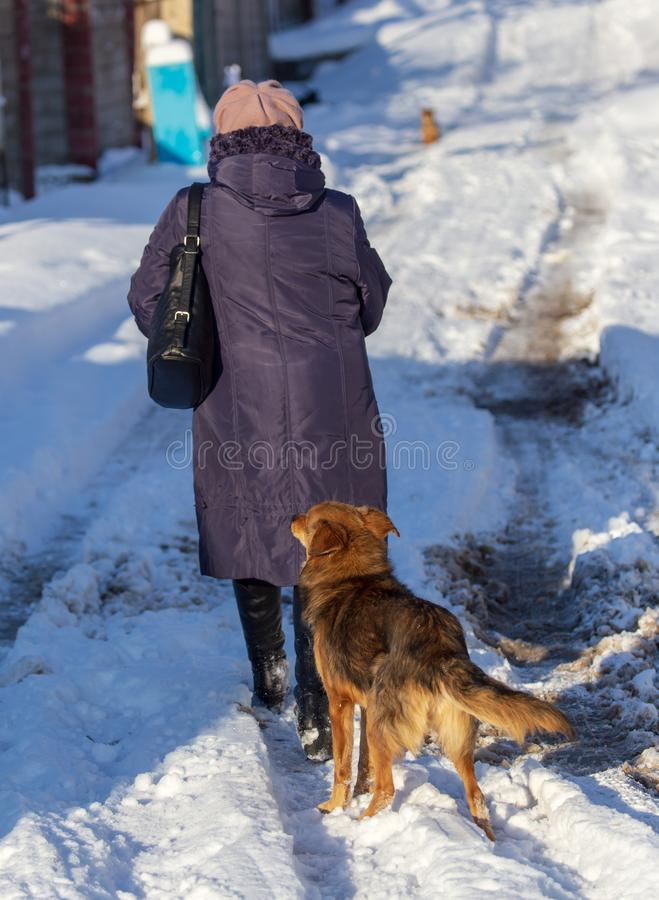 Woman with a dog go on a snowy road in winter royalty free stock photo