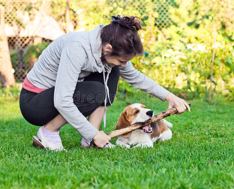 Woman and dog on a lawn. Woman and dog plays with a stick on a lawn stock photography