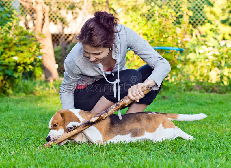 Woman and dog on a lawn. Woman and dog plays with a stick on a lawn royalty free stock image