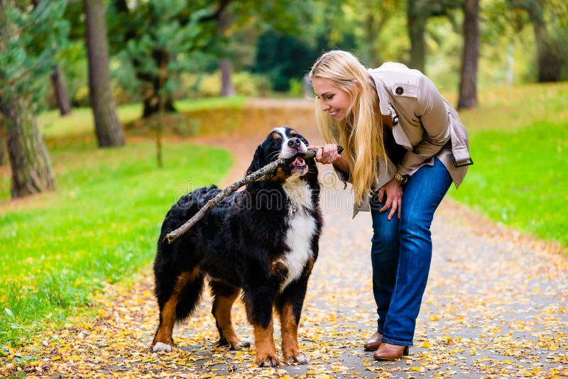 Woman and dog at retrieving stick game. In fall park on dirt path royalty free stock image