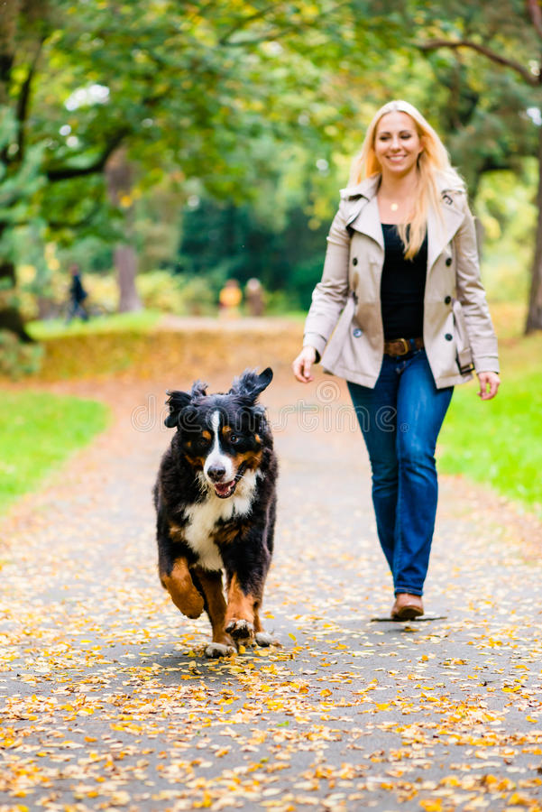Woman and dog at retrieving stick game. In fall park on dirt path stock photos