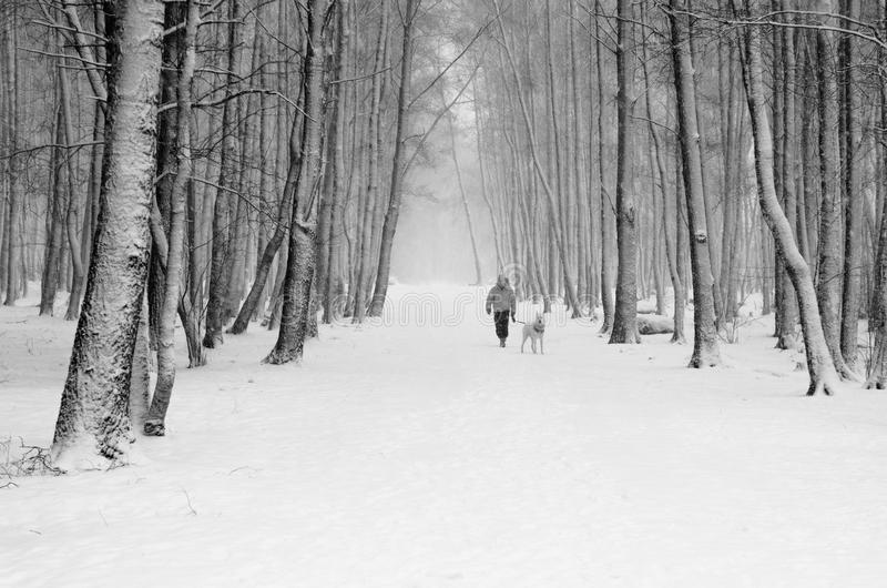 Woman with a dog on a snowy alley stock images