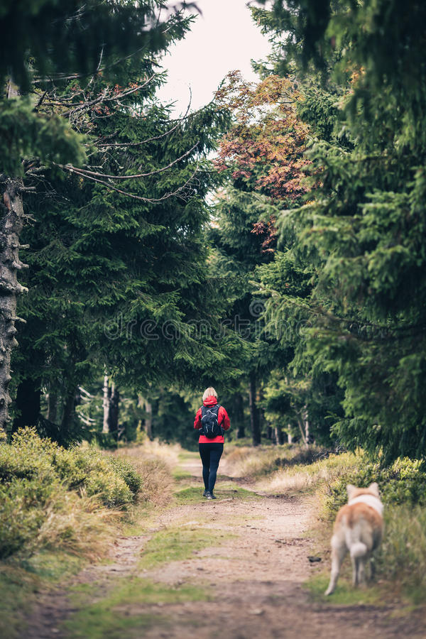 Woman and dog on trail in Izerskie Mountains, Poland. Woman and dog hiking trail through woods on Izerskie Mountains, Poland stock image
