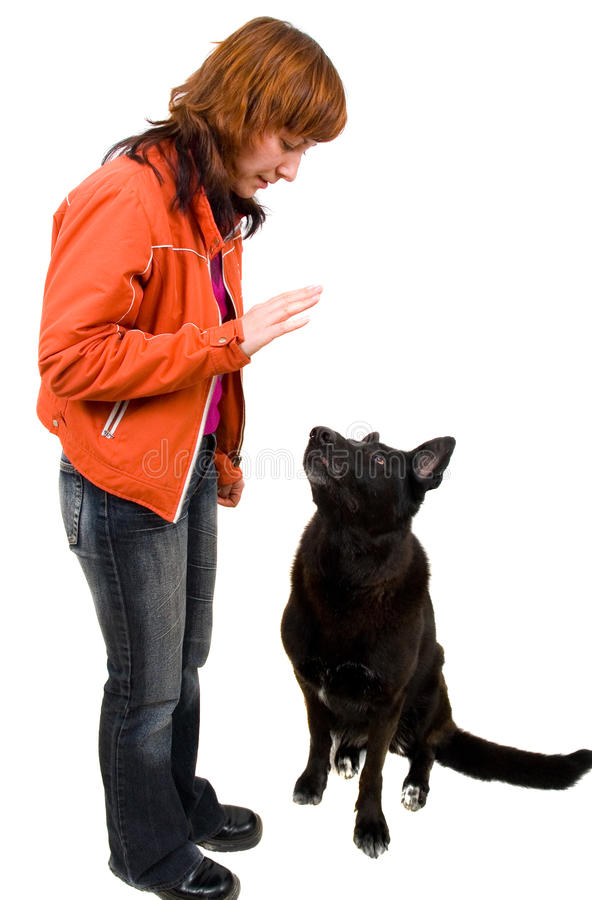 Woman is dog training stock image