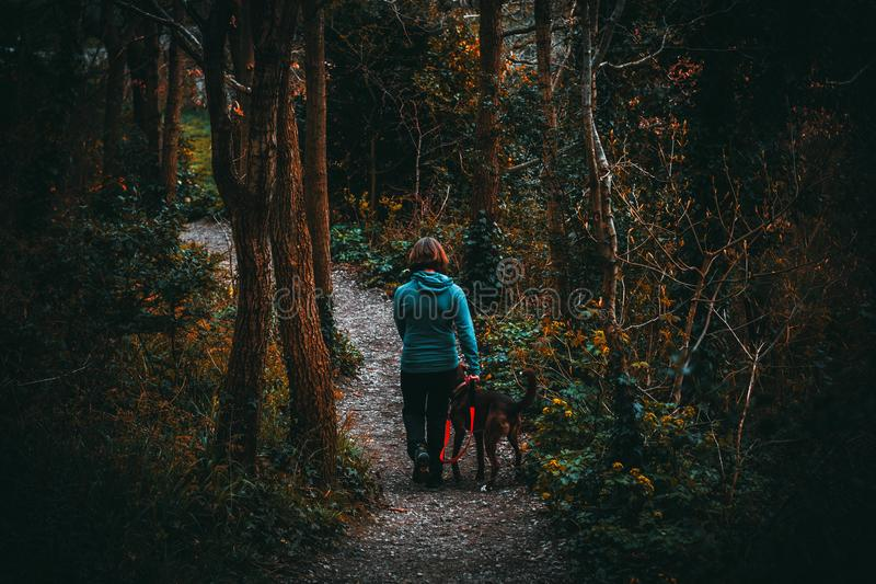 Woman Beside Dog Walking in the Forest Under Tall Trees at Daytime royalty free stock image