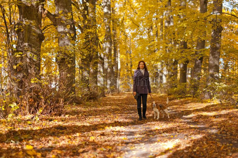 Woman with dog in autumn park. Woman with dog walking in the park stock image