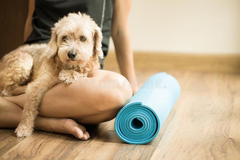 A woman and a dog in yoga class stock image