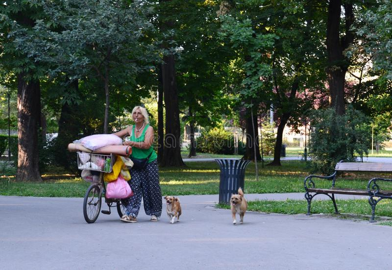 Woman with dogs in the park royalty free stock photo