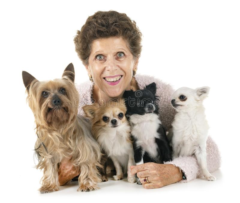 Woman and dogs. In front of white background stock photos