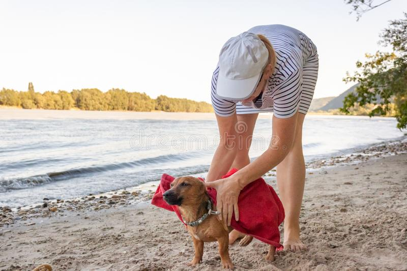 Woman drying her small mixed breed dog at the river beach with a towel. Dog, lifestyle and summer vacation concept.  stock photo