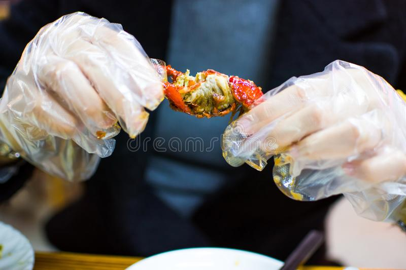 Woman eating a crayfish with plastic gloves. Close up royalty free stock photography