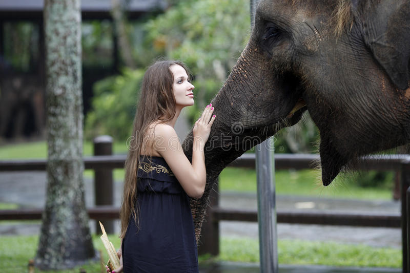 Woman with the elephant, treats, and pats him on the snout, with. Tenderness and care stock photography