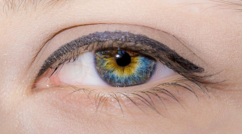 Woman eye with painted long eyelashes and professional make-up close-up stock photography