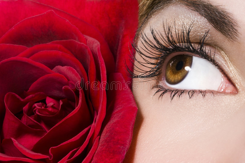Woman eye and red rose stock photos