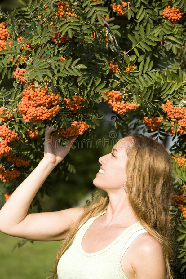 Woman and fall. Pretty model posing in outdoor admiring ashberry tree stock photography