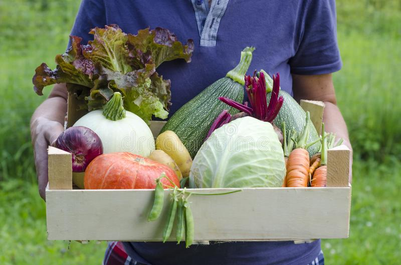 Woman farmer holding a large basket basket with fresh seasonal harvest: pumpkin, zucchini, carrots, onions, beets, potatoes, peas. royalty free stock images