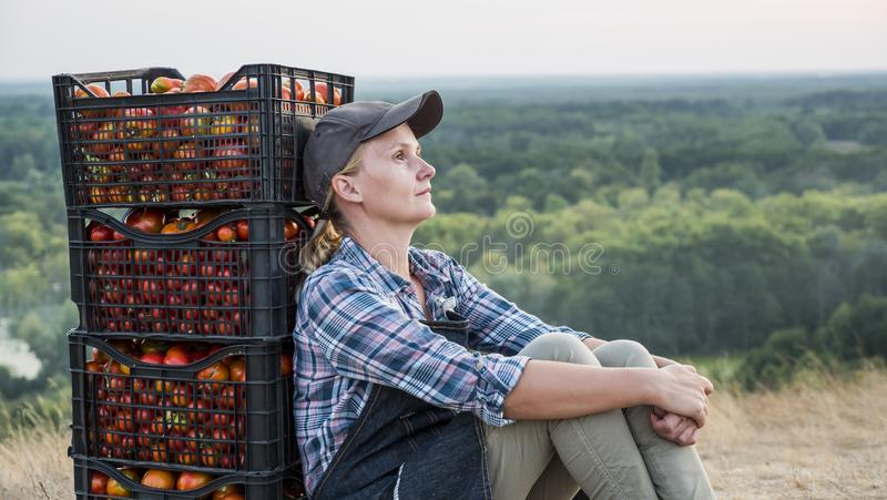 Woman farmer resting after work, sitting near boxes with tomatoes stock images