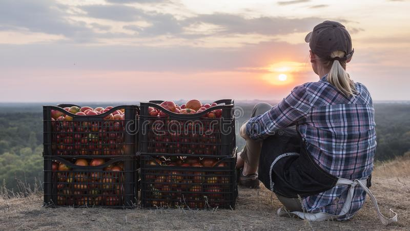 Woman farmer sitting near boxes with tomatoes, admiring the beautiful landscape, resting after work stock photo