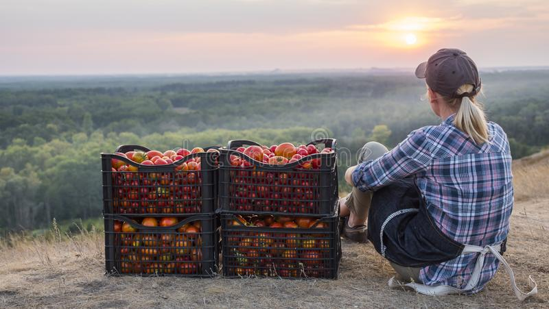 Woman farmer sitting near boxes with tomatoes, admiring the beautiful landscape, resting after work royalty free stock images