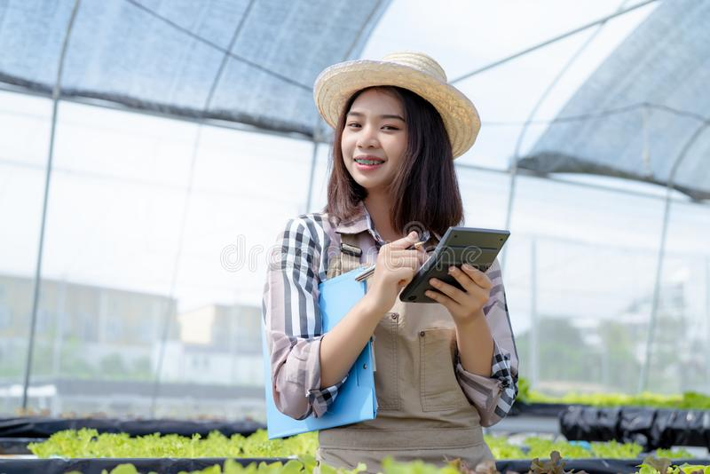 Woman farmer use Calculator checking stock and price hydroponics vegetables royalty free stock images