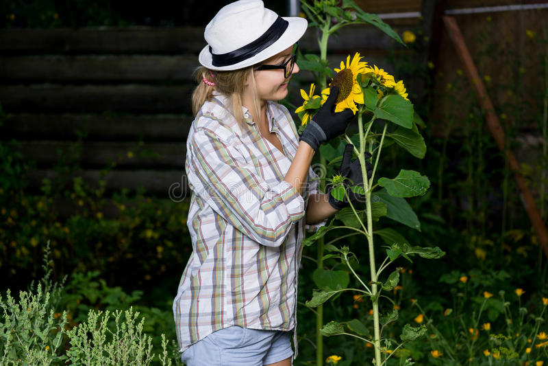 Woman farmer in working gloves inspects sunflower. Outdoors portrait of woman farmer in working gloves inspects sunflower stock images