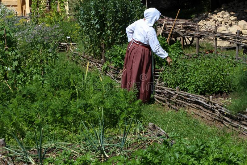 Woman farmer working in vegetable garden. Historical top view and copy space template stock photo. stock image