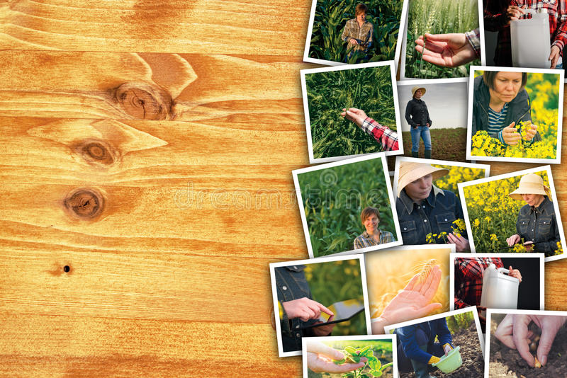 Woman in farming and agriculture, photo collage with copy space royalty free stock photo