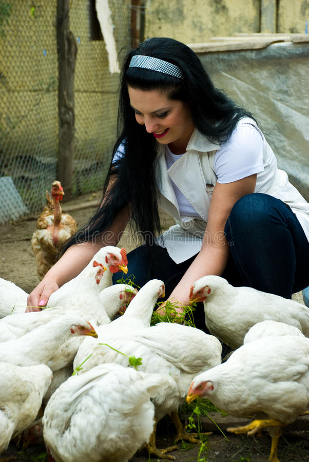 Woman feeding big chicken farm stock images