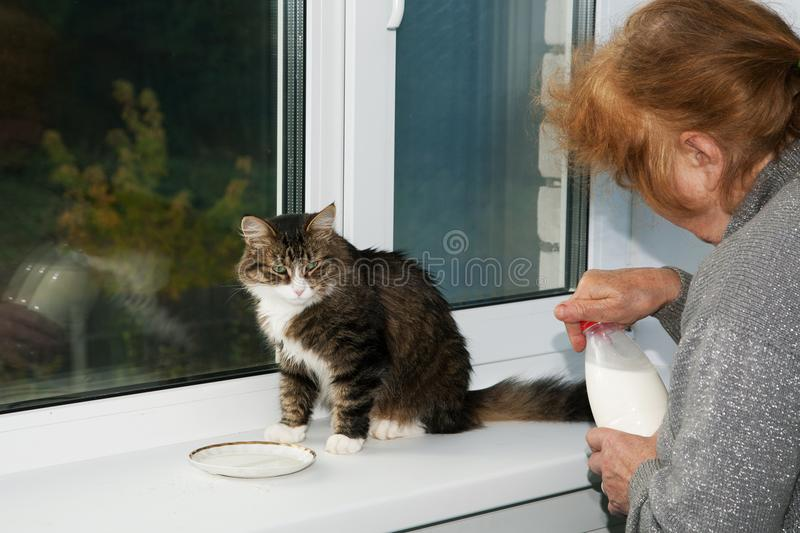 woman is feeding a cat milk from a saucer stock image