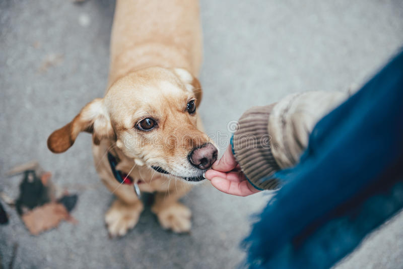 Woman feeding a dog. In the street stock photo