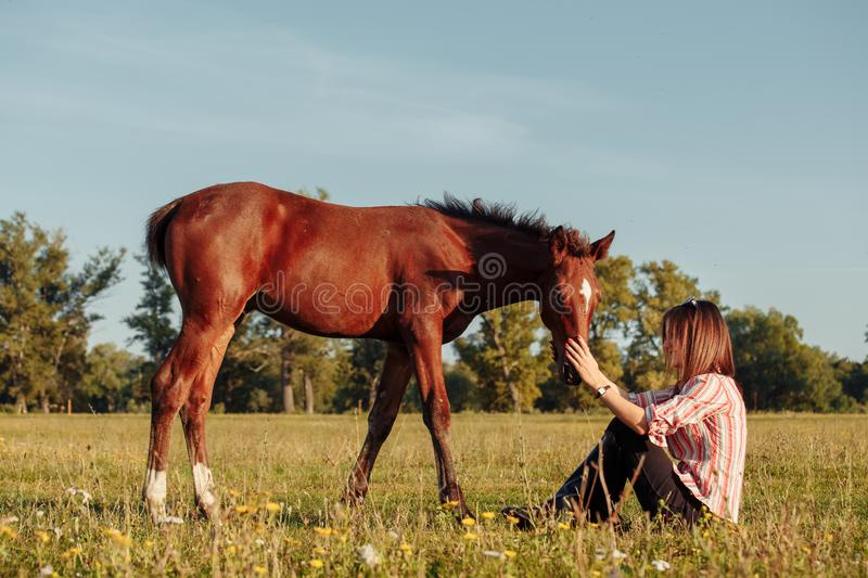 Woman is feeding a foal from her hands stock photography