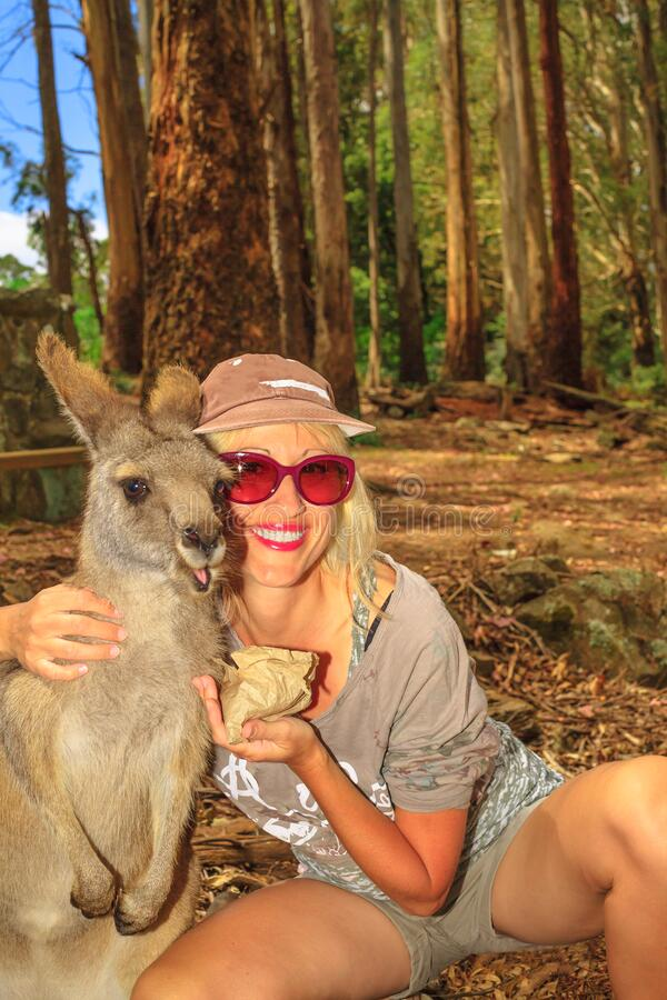 Woman feeding kangaroo royalty free stock images